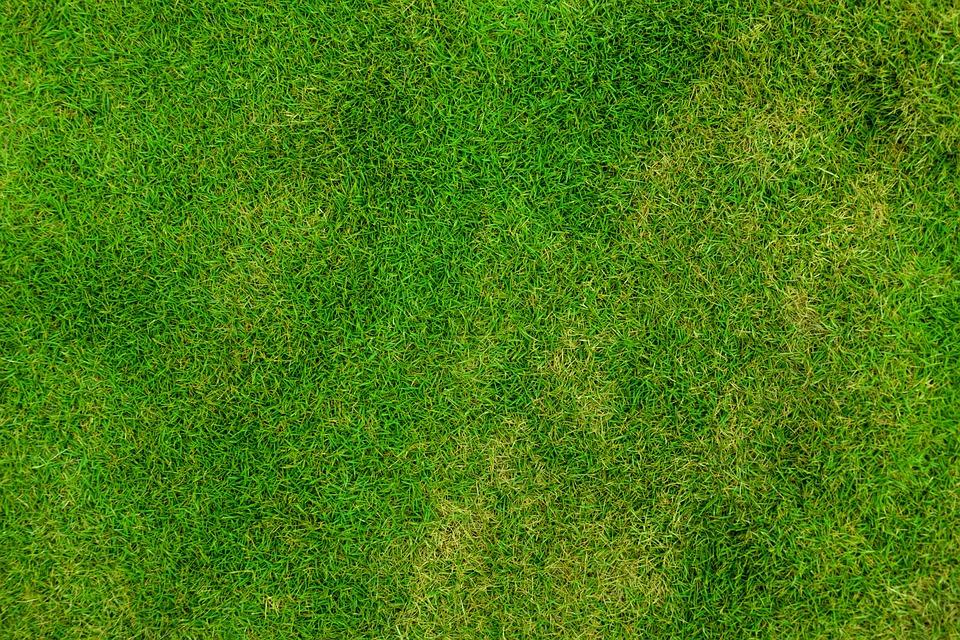 Comment faire pour avoir un beau gazon vert ?