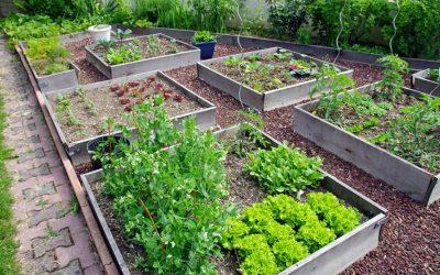 Comment aménager un carré potager dans son jardin ?